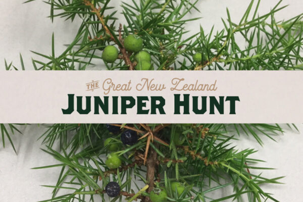 The-Great-New-Zealand-Juniper-Hunt